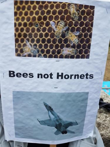 bees not hornets